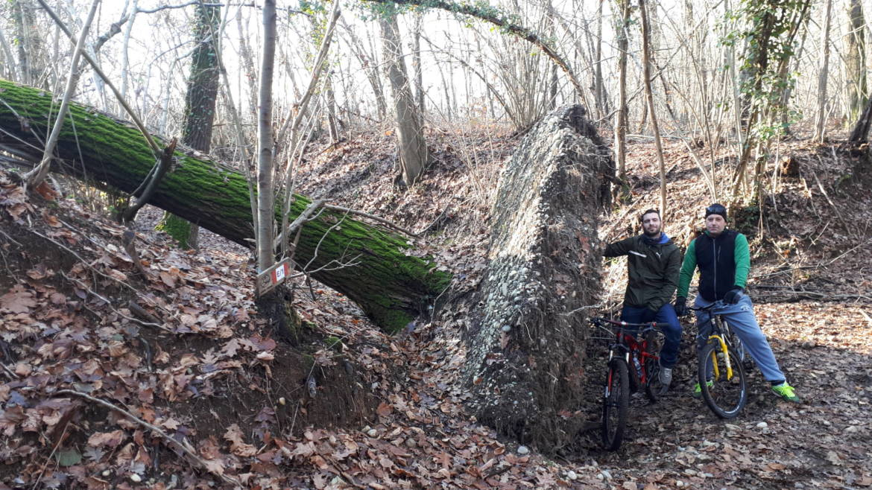 sotto-albero-caduto-1-scaled.jpg